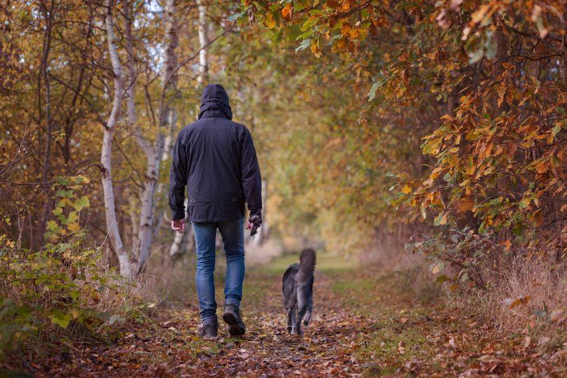 autumn-walk-1792812_1280