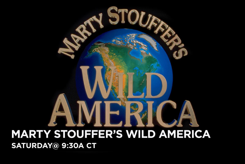 Marty Stouffer's Wild America on every Saturday  at 9:30a CT.